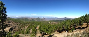 Pinewood of Gran Canaria Island Royalty Free Stock Photo