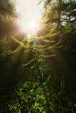 Pinewood pendant le coucher du soleil photo libre de droits