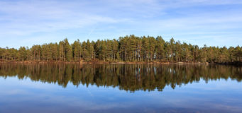Pinewood, pine forest reflected in a lake in the wilderness of Norway, panorama. Pinewood, pine forest on a sunny day, reflected in a lake in the wild forests of Stock Images