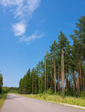 Pinewood and road. Pinewood in the summer on a clear day Royalty Free Stock Images
