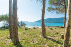 Pinewood by the sea in Mugoni beach Stock Images
