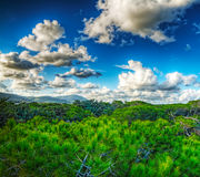 Pinewood and soft clouds Royalty Free Stock Images