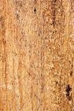 Pinewood Texture Closeup Royalty Free Stock Images