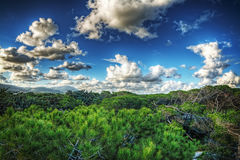 Pinewood under a cloudy sky in Sardinia Stock Image