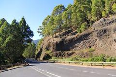 Pinewood w Tenerife Obrazy Royalty Free