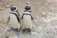 pingüino imagenes de archivo