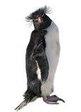 Pingüino aislado de los macarrones Fotos de archivo