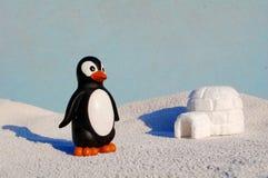 Pingüino con la miniatura del iglú fotografía de archivo libre de regalías