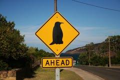 Pingüino a continuación Fotos de archivo