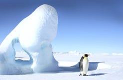 Pingüino de emperador (forsteri del Aptenodytes) foto de archivo
