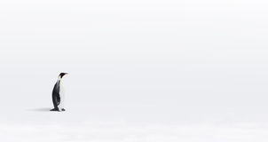 Pingüino de emperador solitario Fotos de archivo