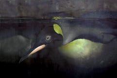 Pingüino de la natación   Imagenes de archivo