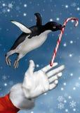 Pingüino de la Navidad Fotos de archivo