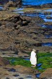 Pingüino de Yelloweyed en la orilla imagen de archivo