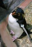 Pingüino del bebé Imágenes de archivo libres de regalías