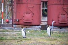 Pingüino dos en el ártico imagenes de archivo