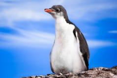Pingüino en Ant3artida Imagen de archivo