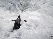 Pingüino en el mar agitado Fotografía de archivo