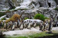 Pingüino en el PARQUE ZOOLÓGICO fotos de archivo