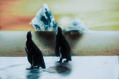 Pingüino en la nieve e hielo, puesta del sol con el iceberg que se agrieta, globa stock de ilustración