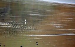 Pingüino en la playa foto de archivo