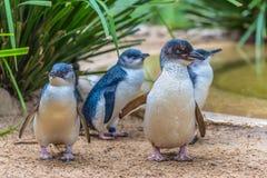 Pingüino en parque zoológico Foto de archivo libre de regalías