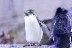 Pingüino en una roca con otros pingüinos Fotografía de archivo