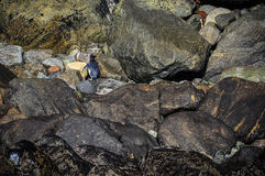 Pingüino lindo en el Milford Sound, Nueva Zelanda Imágenes de archivo libres de regalías