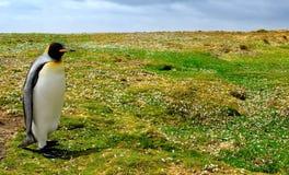 Pingüino que recorre fotografía de archivo