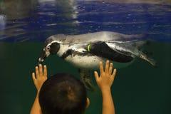 Pingüino y niño Fotos de archivo