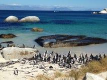pingüinos Imágenes de archivo libres de regalías