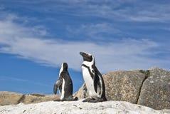 Pingüinos africanos Imágenes de archivo libres de regalías