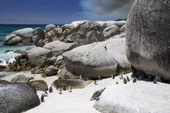 Pingüinos africanos con el fuego de la montaña imagenes de archivo