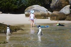 Pingüinos amistosos Fotografía de archivo libre de regalías