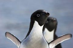 Pingüinos antárticos Foto de archivo
