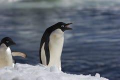 Pingüinos antárticos Fotos de archivo