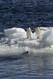Pingüinos antárticos Fotografía de archivo