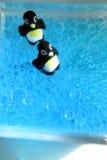 Pingüinos burbujeantes Foto de archivo libre de regalías