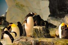 Pingüinos con ellos amigos en Seaworld imágenes de archivo libres de regalías