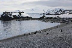 Pingüinos de Chinstrap en la Antártida Fotos de archivo