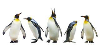 Pingüinos de emperador Fotografía de archivo