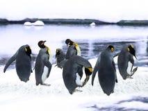 Pingüinos de emperador en la nieve imagen de archivo
