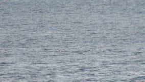Pingüinos de Gentoo en la Antártida - península antártica almacen de metraje de vídeo