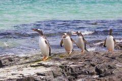 Pingüinos de Gentoo (Pygoscelis Papua) que caminan a lo largo de las rocas en el wa Fotos de archivo
