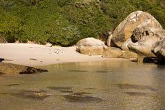 Pingüinos de la playa de los cantos rodados Imágenes de archivo libres de regalías