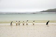 Pingüinos de Magellanic en la playa fotografía de archivo