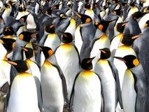 Pingüinos de rey fotos de archivo
