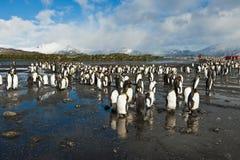 Pingüinos de rey con los visitantes humanos Imágenes de archivo libres de regalías