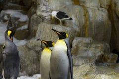 Pingüinos de rey en la nieve Fotografía de archivo