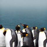 Pingüinos de rey en un día brumoso Fotos de archivo
